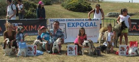 CAMPEONES FINALES 2013: 1º Akita, 2º Stafford, 3º Bulldog inglés.