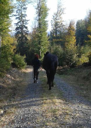 Horsetrekking im Grünen. Entspannung für Mensch und Tier.