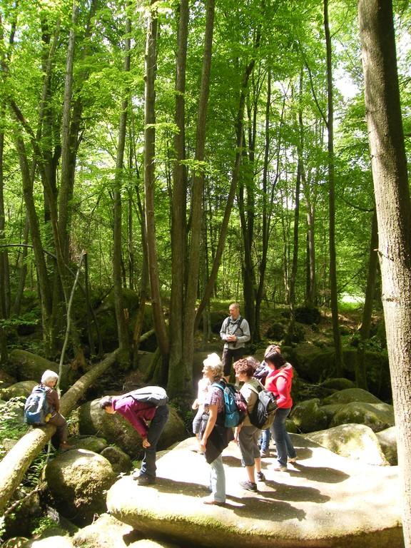 Naturzauber im Höllbachtal