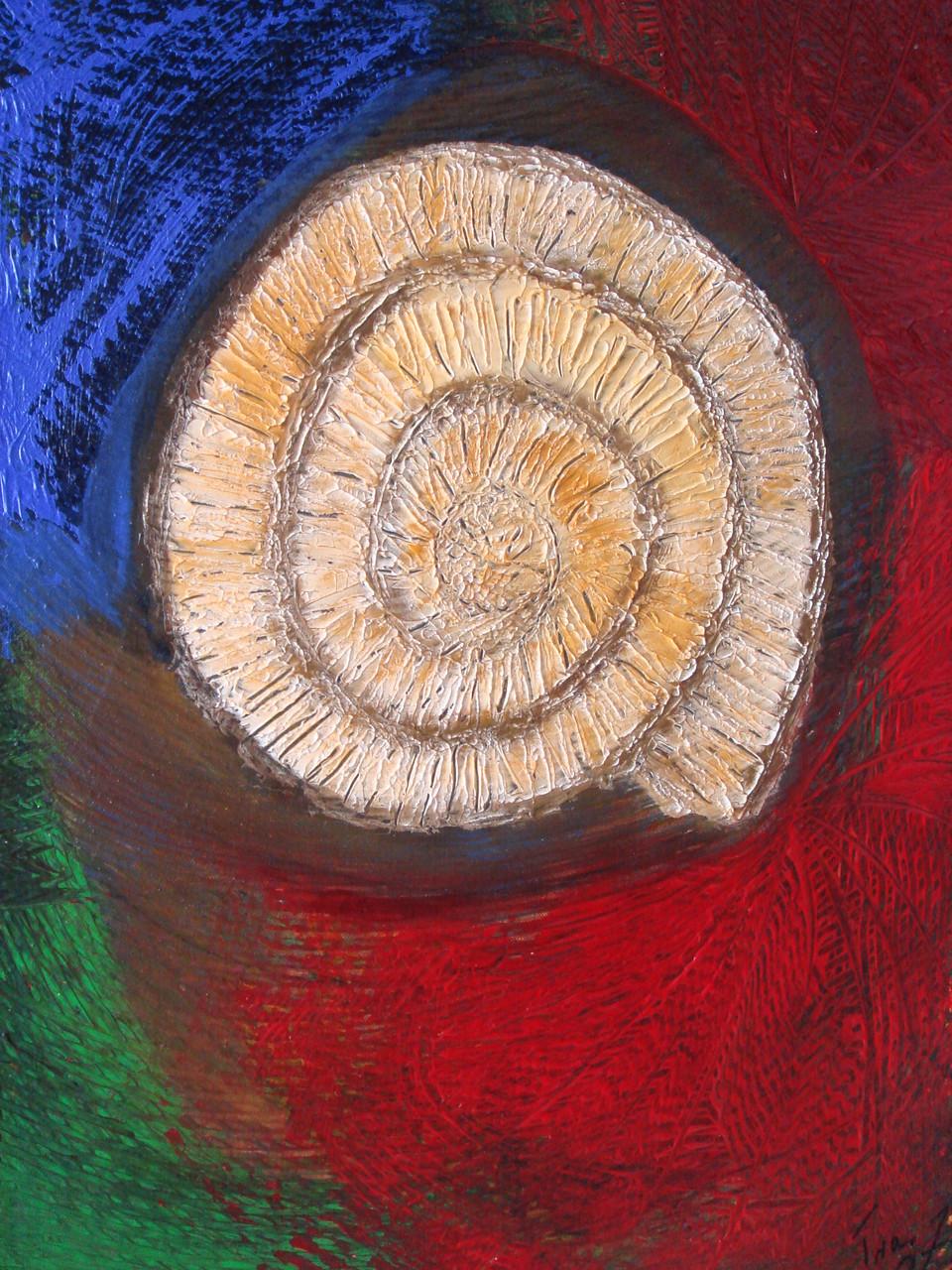 Ammonit 80 x 60 cm