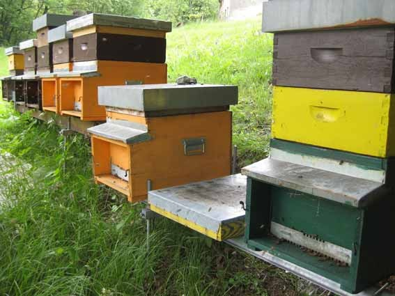Bienenstand in Termine