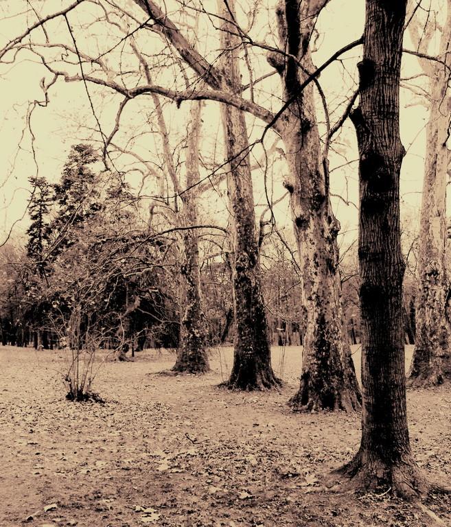Avenue Trees