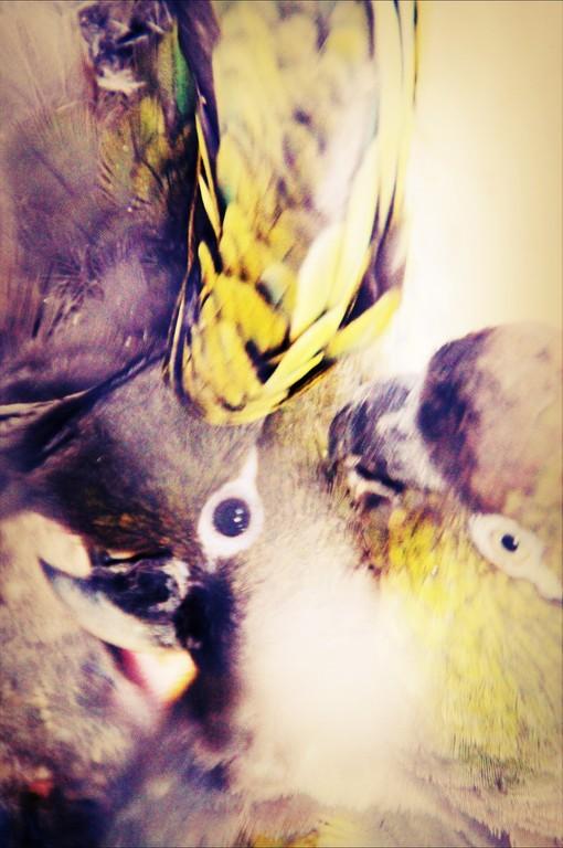 Parrots I