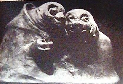 (16) Гадины (1909г.)