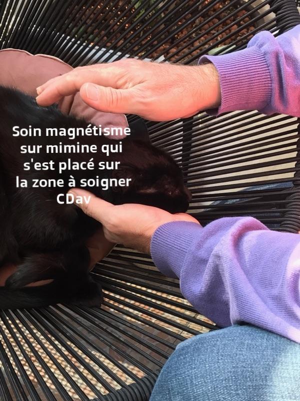 magnétisme sur animaux