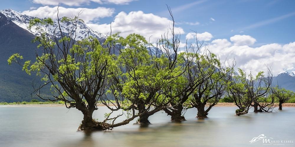 """South Island: Die """"Willow Trees"""" von Glenorchy"""