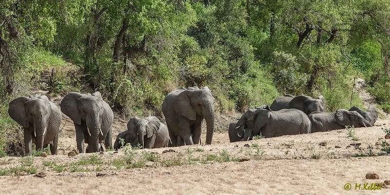 Südafrika: Elefant