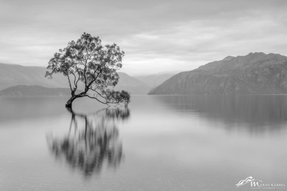 South Island: Lake Wanaka Tree