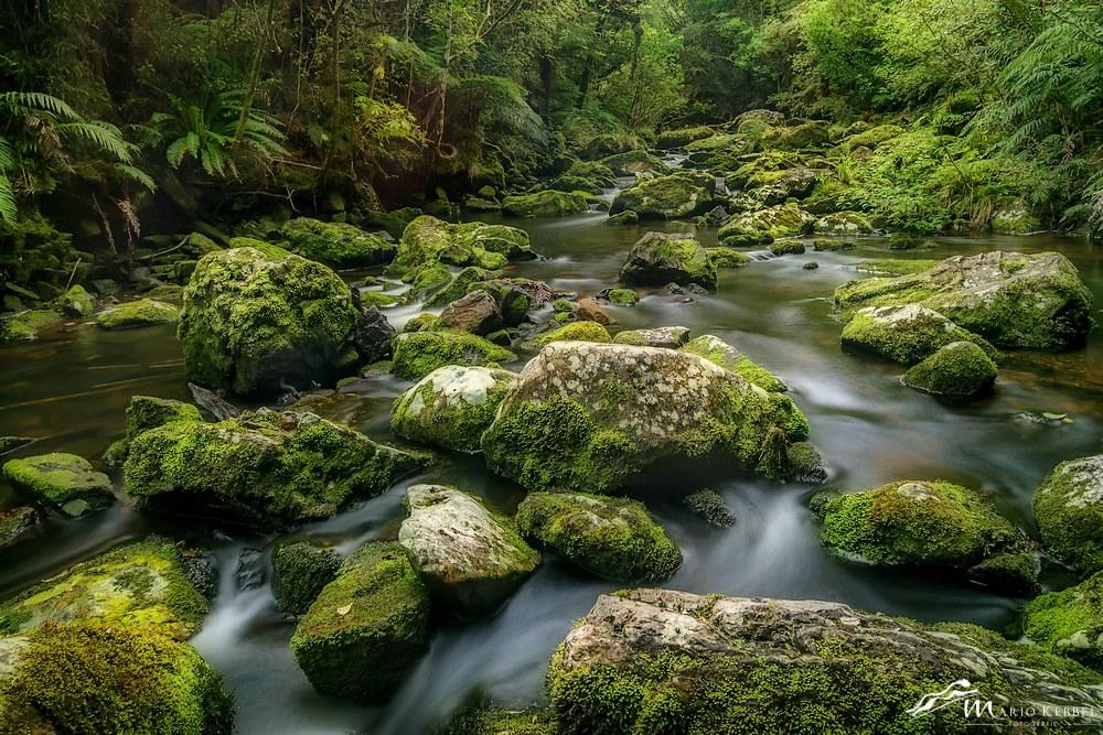 South Island: Unterwegs im Regenwald der Catlins