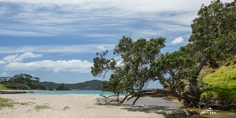 North Island: Am Elliots Strand (Bay of Islands)