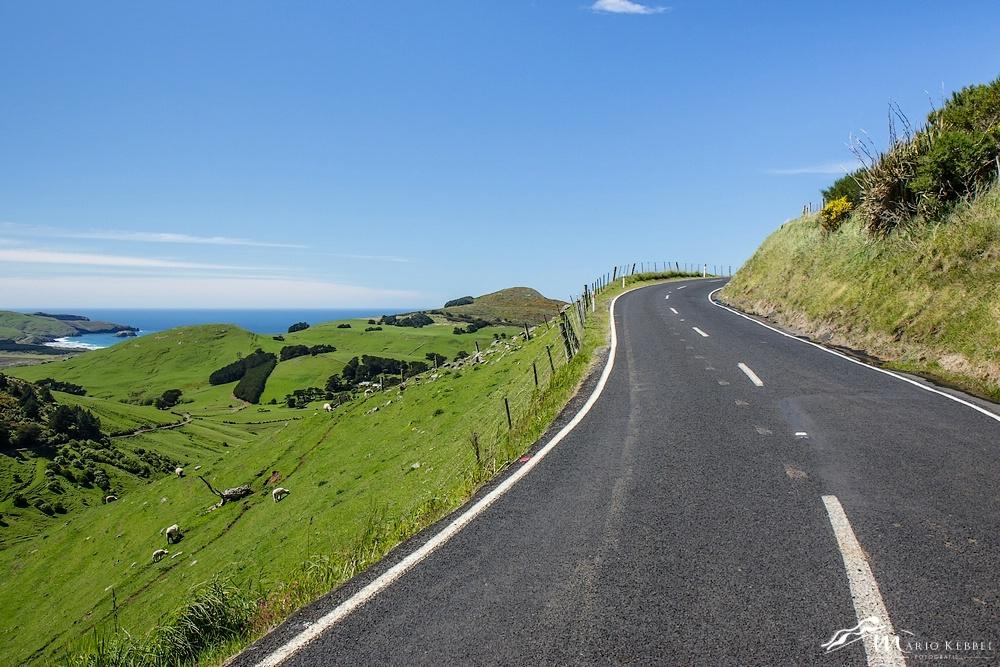 South Island: Unterwegs auf der Otago Peninsula