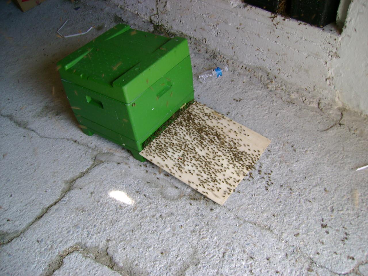 Feierabend für die Bienen