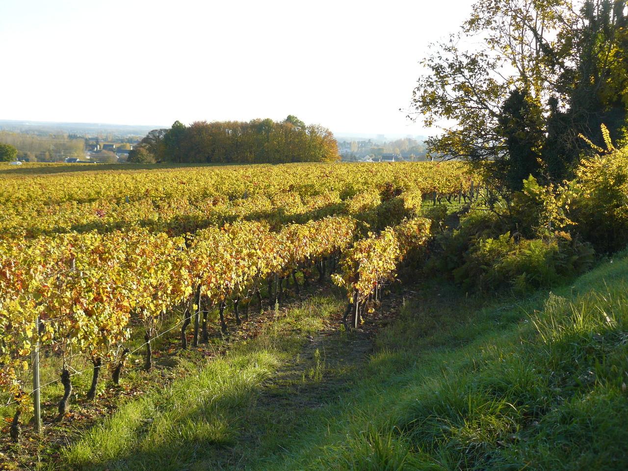 La vigne à Benais 22 rue du poids Bourgueil