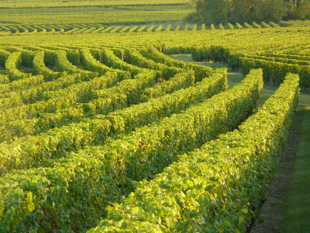 Vignoble de Bourgueil 22 rue du poids Bourgueil