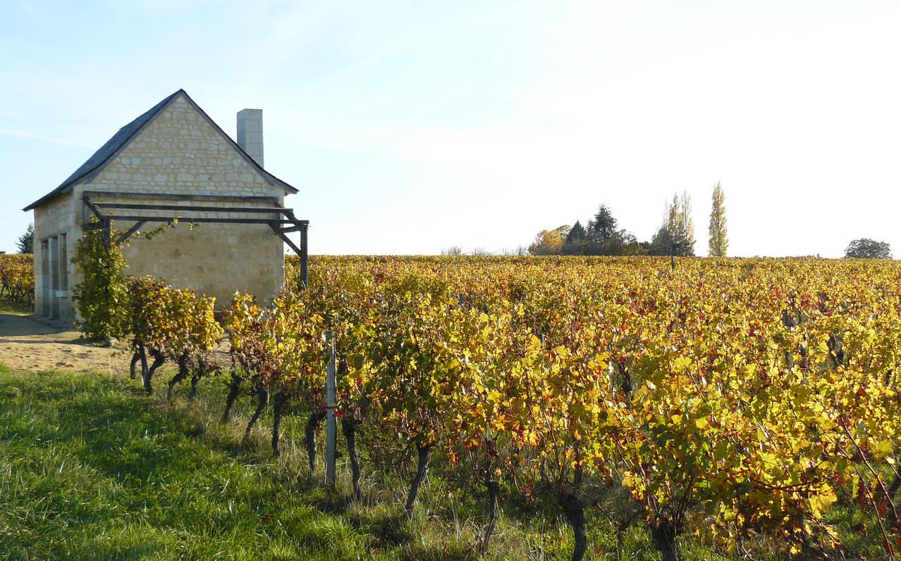 Maison des vignes à Benais 22 rue du poids Bourgueil