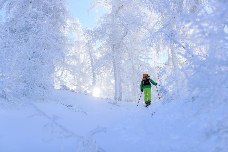 Skitour im Wald