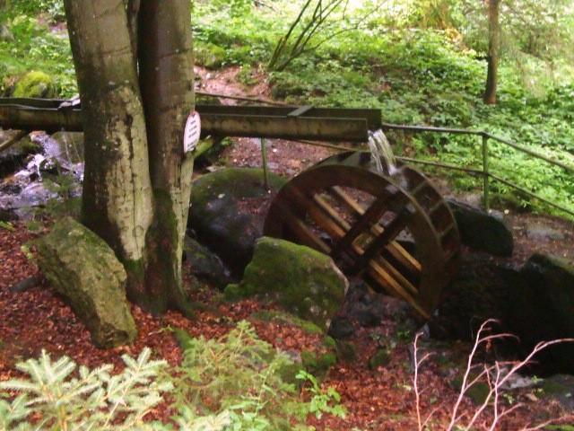 Beim Wandern im Böhmerwald gibt es viel zu entdecken!