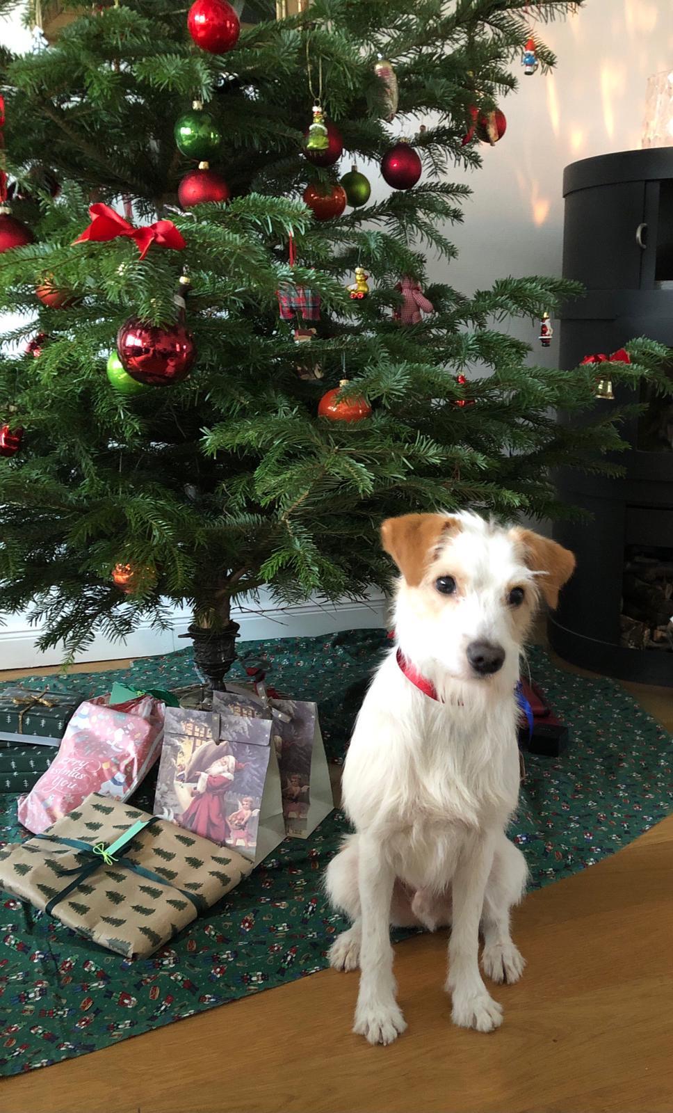 Anjo unterm Weihnachtsbaum