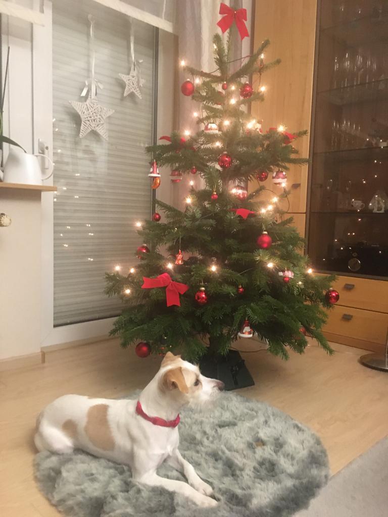 Amy (Alva) unterm Weihnachtsbaum