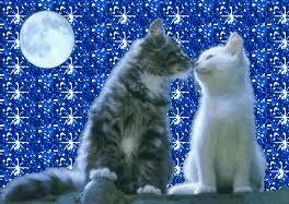 amori da gatti