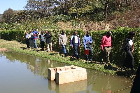 Ferme Bumaki, Kimbeimbe: un projet de pisciculture