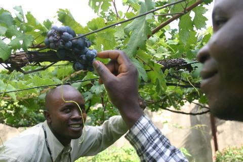 Institut Francois de Sales, Lubumbashi: les étudiants voient un cep pour la première fois