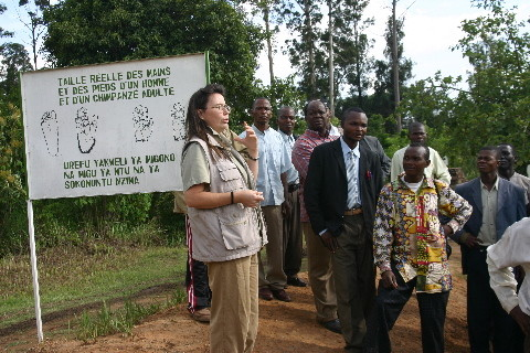 Zoo de Lubumbashi, Projet Jack: le sauvetage des chimpanzés