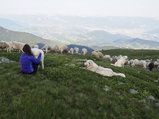 Vendredi 19h, repas rencontre avec les bergers du Grand Colon. Pensez à réserver !