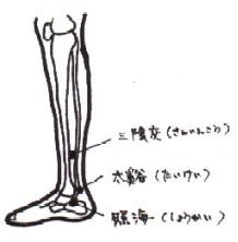 leg.jpg (10627 バイト)