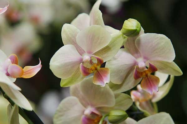 orchideen sukkulente und tillandsien kaufen in wien. Black Bedroom Furniture Sets. Home Design Ideas