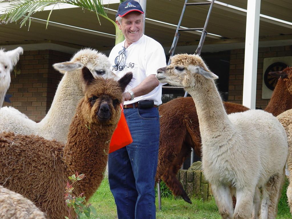 Bill Game и его альпаки (из Южной Америки)