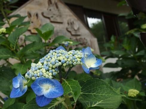 雨と紫陽花の7月