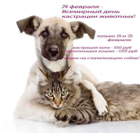 операции кошки собаки в саратове дешево