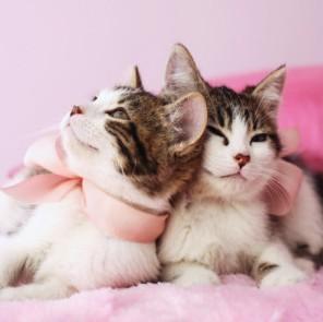 стерилизация кошки в саратове дешево цена