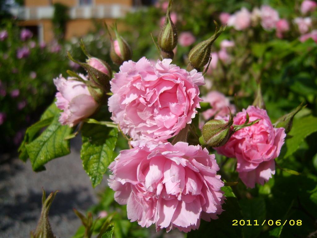 Signe Relander Rose; LandFrauen Bordesholm