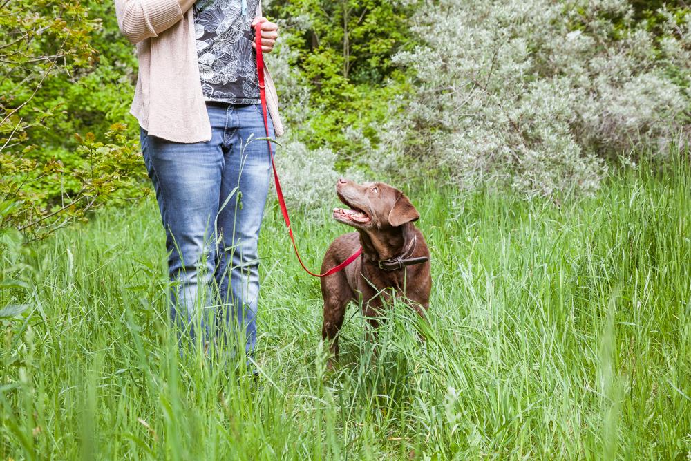 Eine Frau mit einem Hund an der Leine beim Einzeltraining von Rebeccas Hundeschule in Ottensen