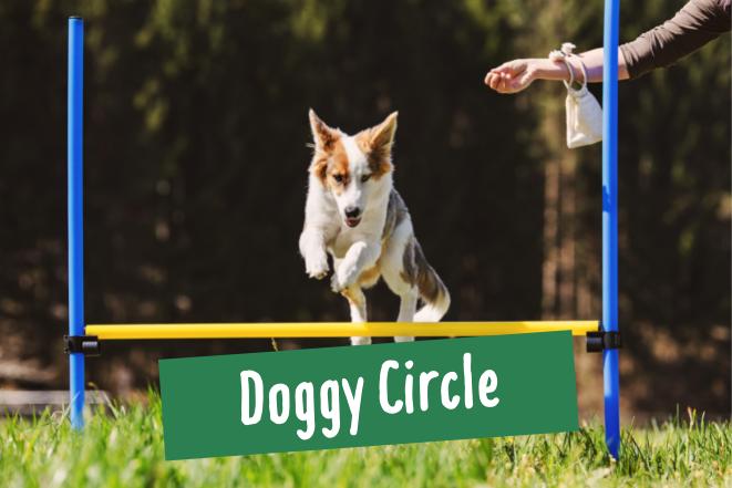 Hund springt über eine Hindernisstange beim Doggy Circle im Hamburger Stadtpark