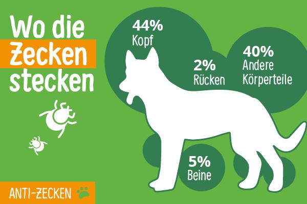 Infografik mit der Abbildung eines Hundes und der Verteilung von Zecken