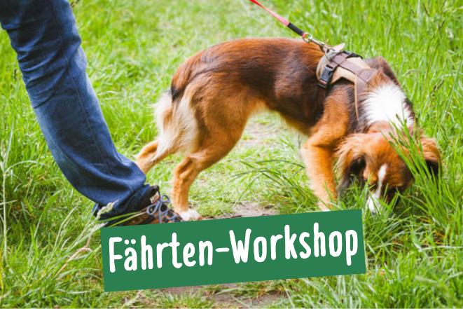 Hund mit Besitzer bei der Fährtensuche für Anfänger in Hamburg Ottensen