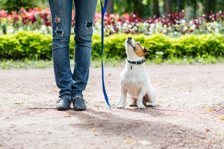 Hund an der Leine beim Training