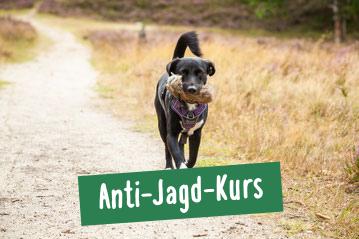 Hund auf Weg in der Heide nahe Hamburg beim Apportieren