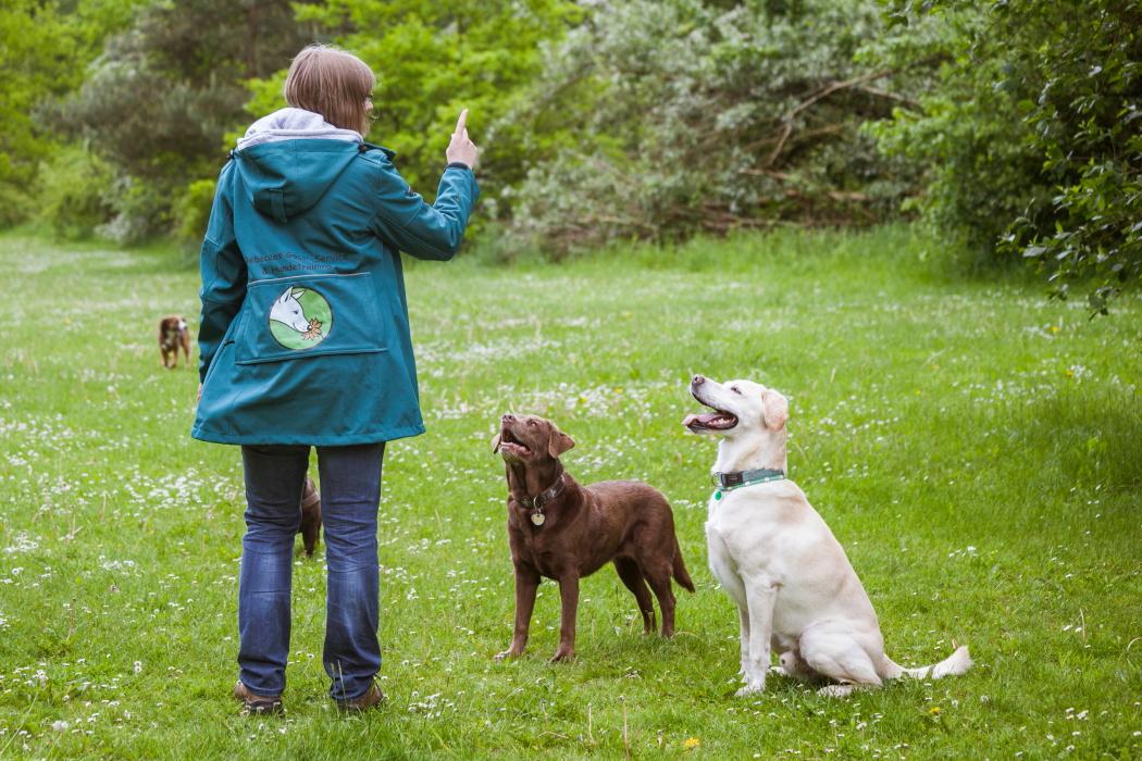 Hundetrainerin Rebecca mit zwei Hunden auf einer Wiese beim Training