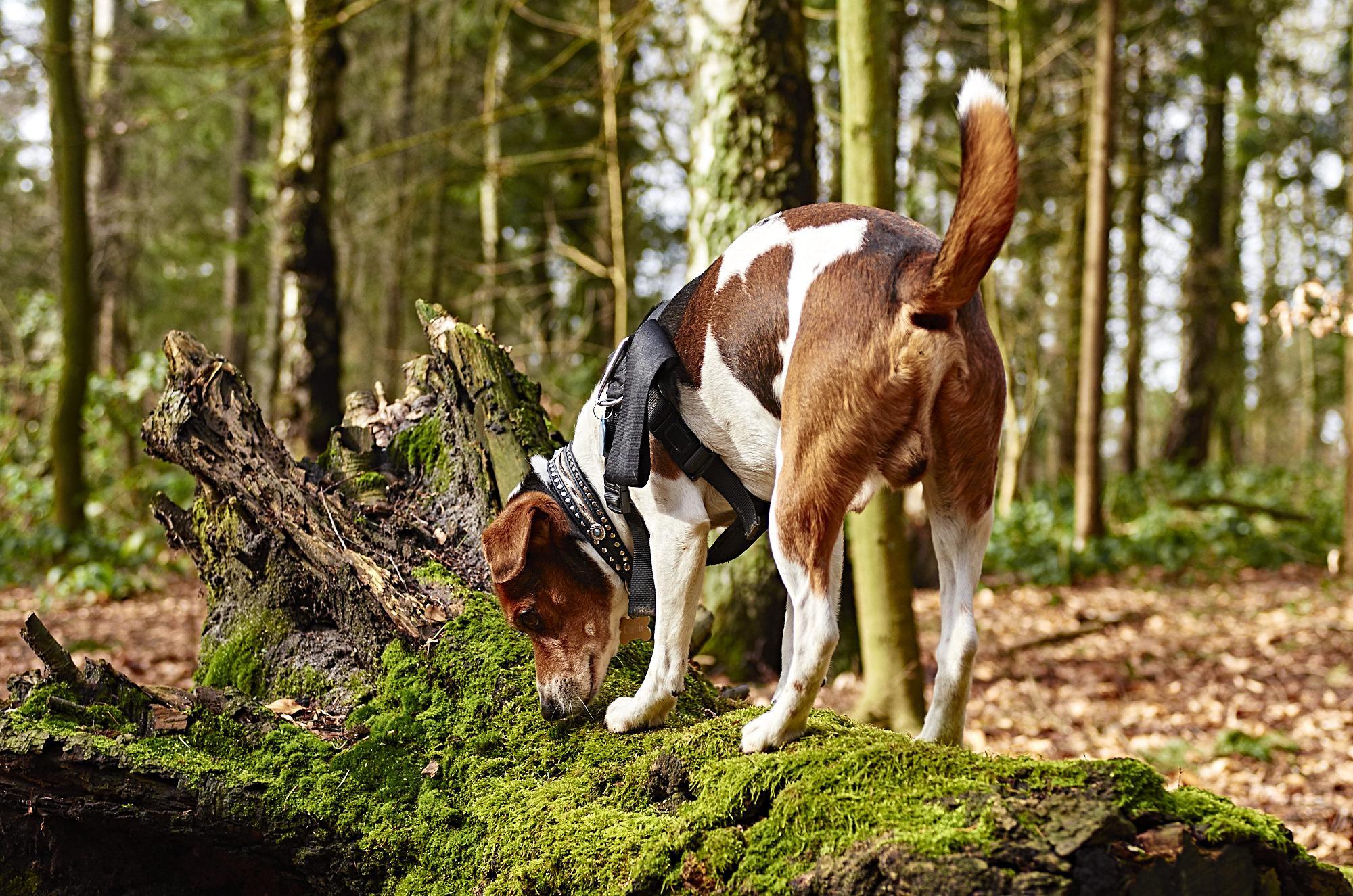 Ein Hund steht beim Fun-Kurs in Hamburg auf einem Baumstamm und schnüffelt