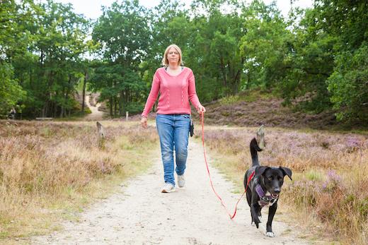 Hundetrainerin Rebecca mit ihrem Hund Naira an der langen Leine in den Holmer Sandbergen