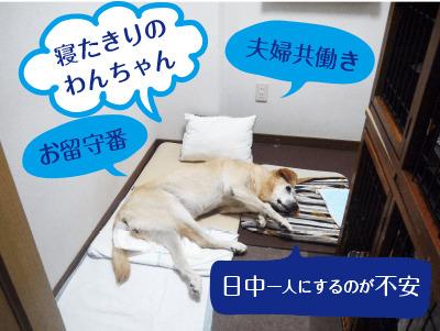 寝たきり犬