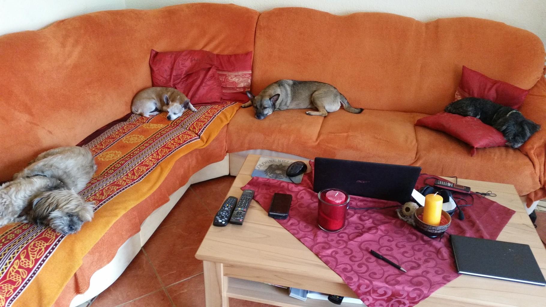 Alle Müde nach dem Spaziergang
