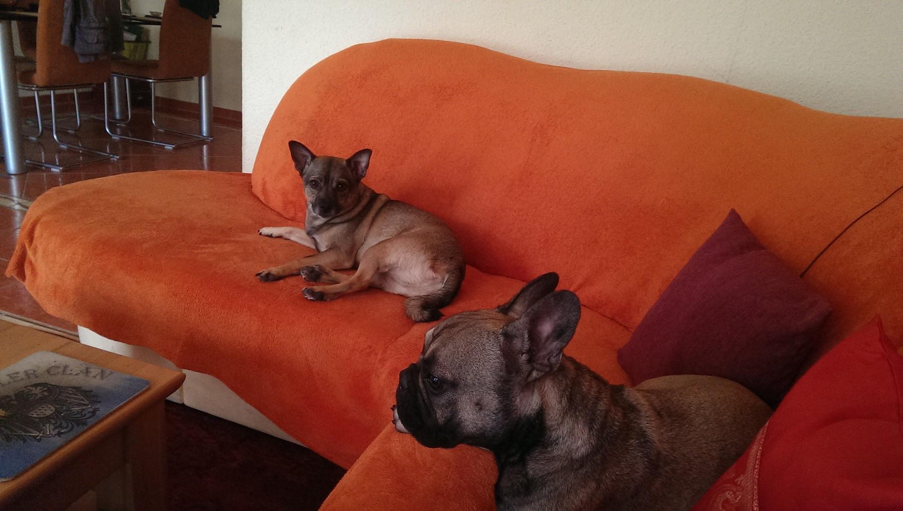 Mylo und Marley beim Chillen ;-)
