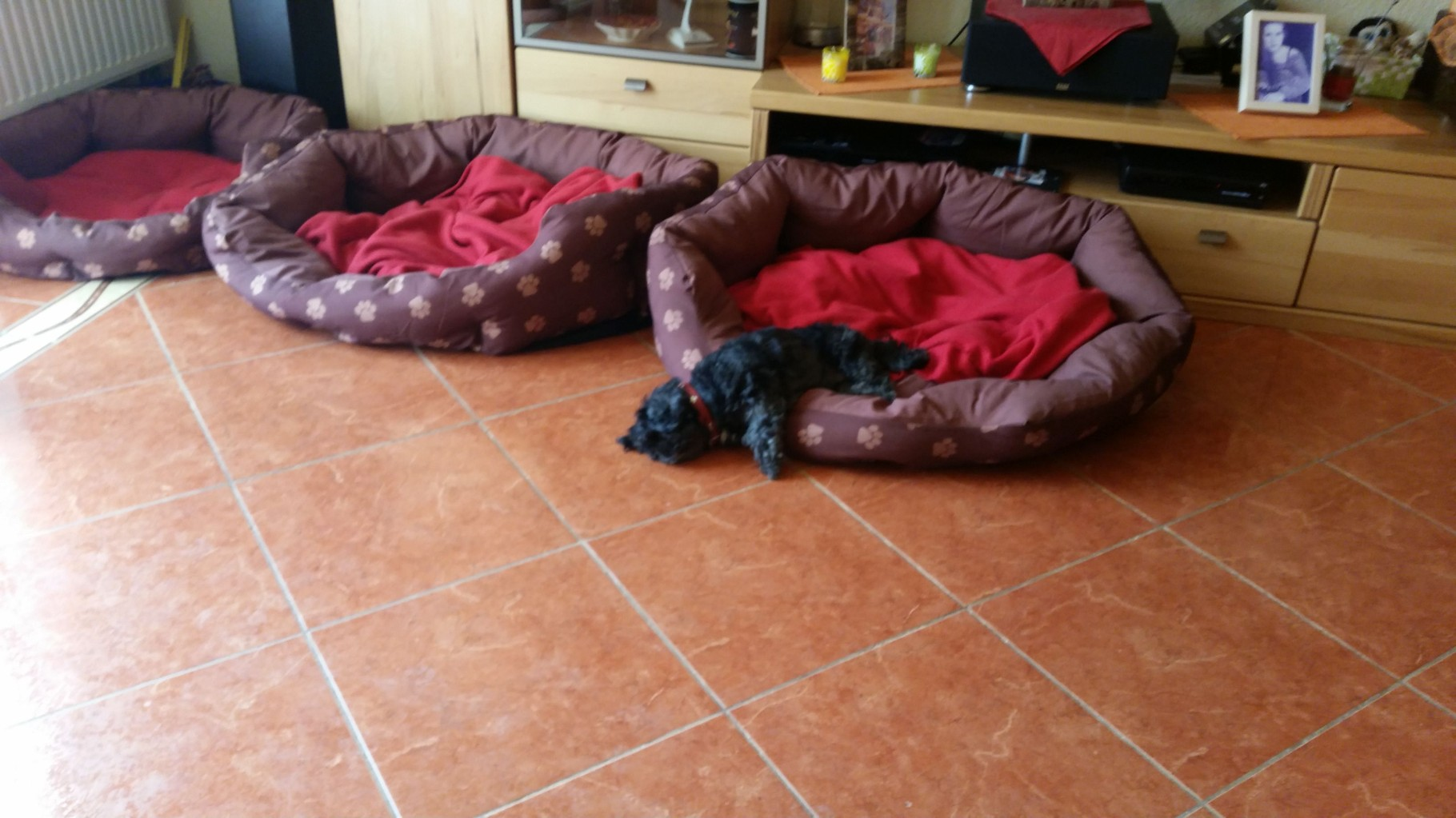 Trixi beim Schlafen :-)))))