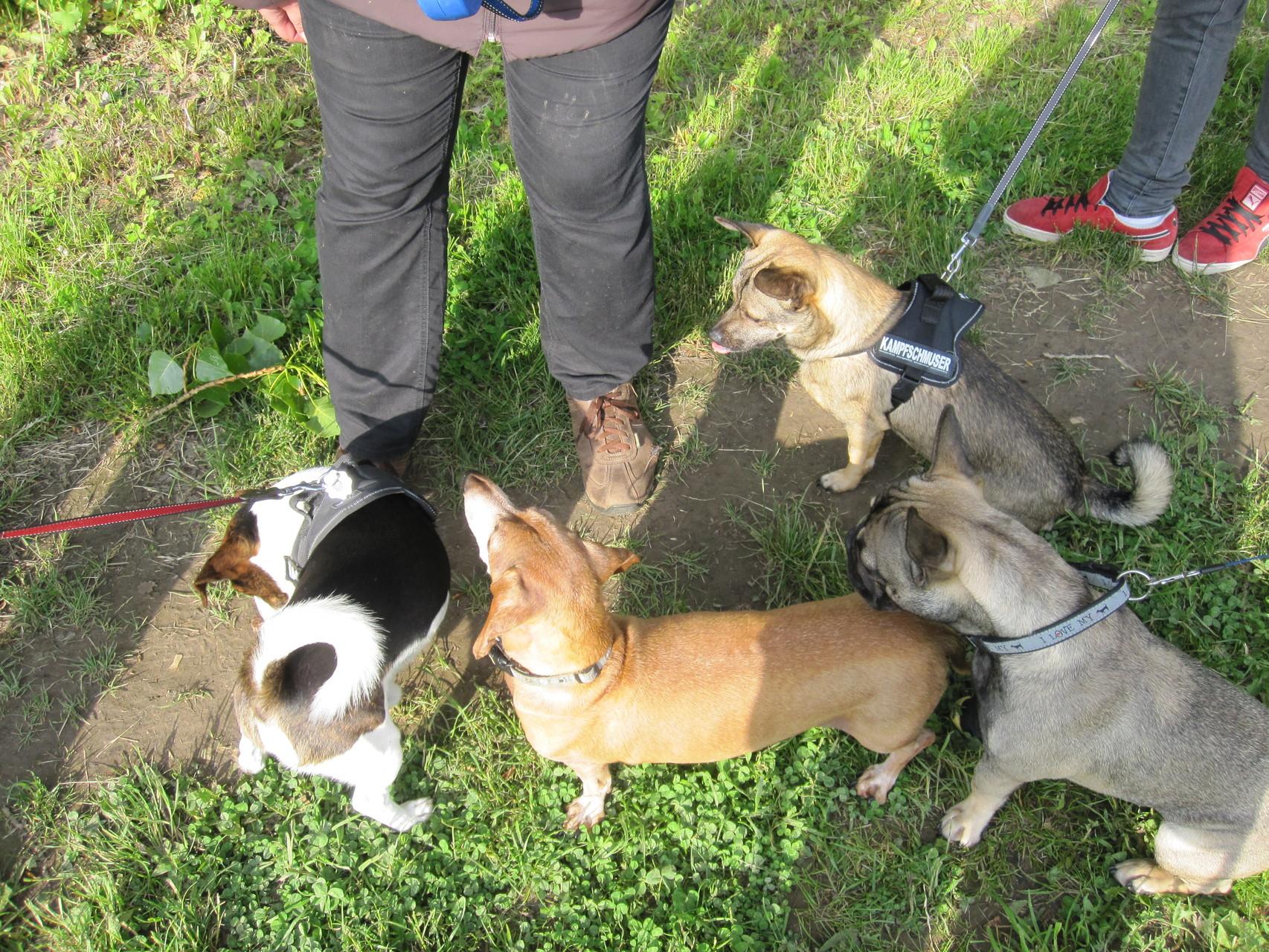 Mylo und seine kleinen Freunde ;-)