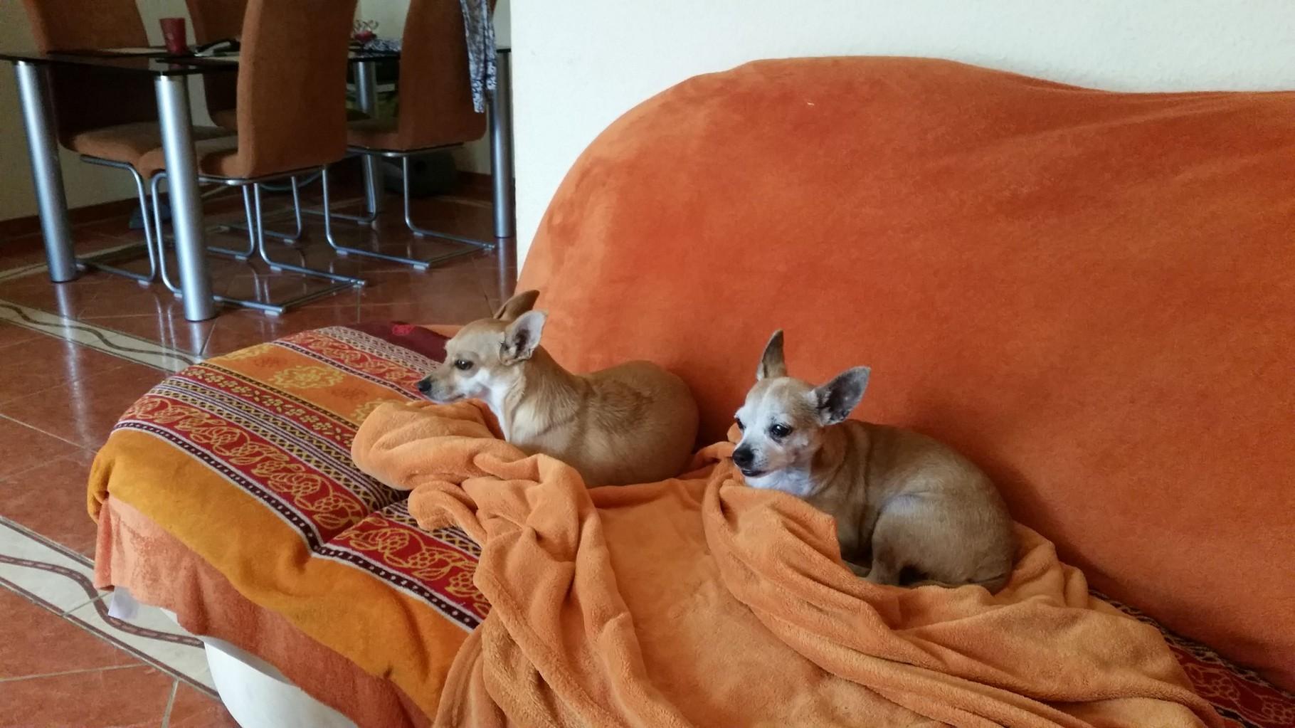 Cora und Luna